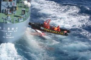 ONG-ul Sea Shepherd